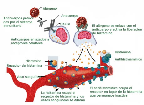 comose produce alergia
